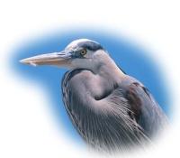 Blue Heron Audubon Preserve