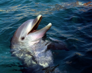 Dolphin and Nature Watching Excursion