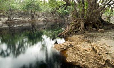 Cypress Creek Wildlife Management Area