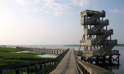 Port Royal Cypress Wetlands Walking Trail