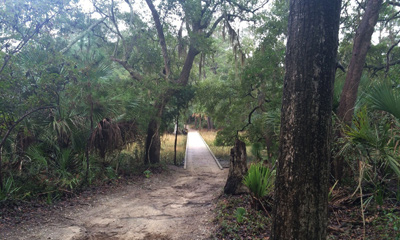 Spanish Mount Trail at Edisto Beach State Park
