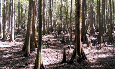 Tillman Sand Ridge Wildlife Management Area