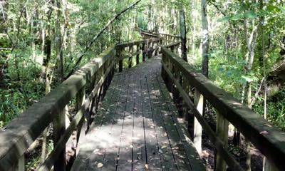 Westvaco Nature Trail