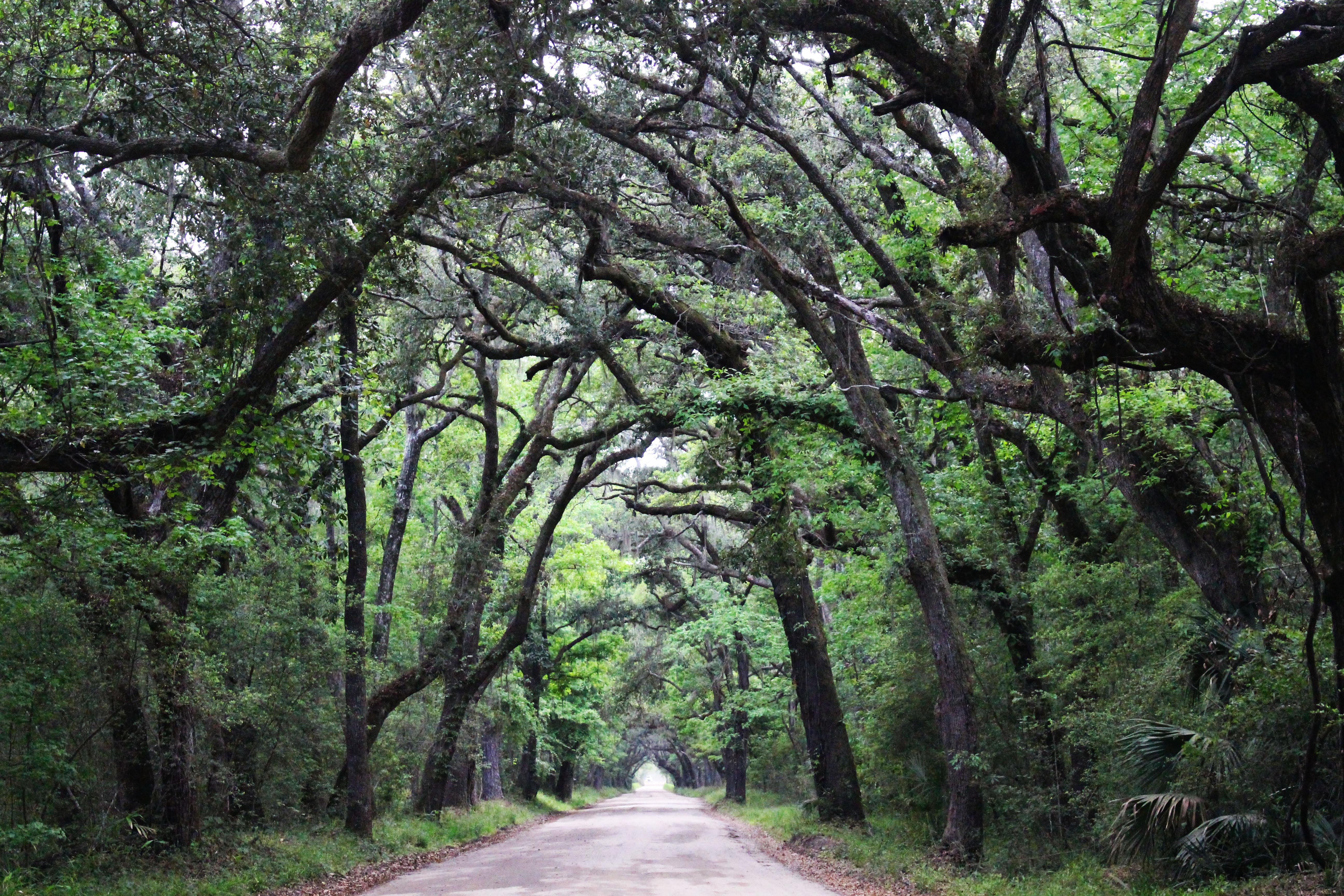 Botany Bay drive