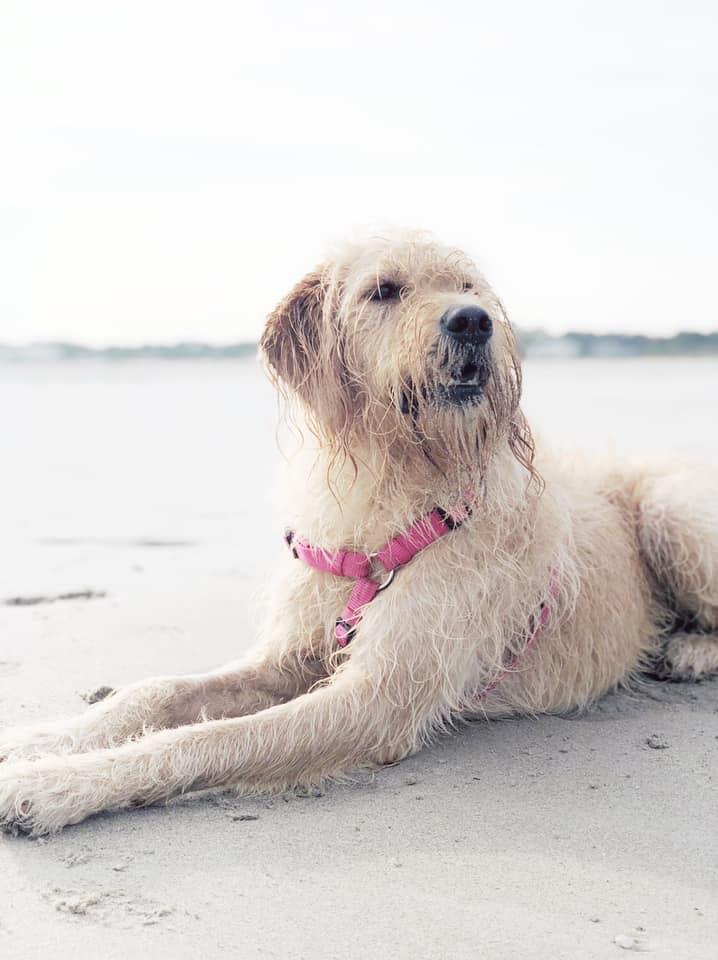 Fripp Island is dog friendly