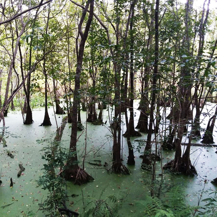 braided creek swamp