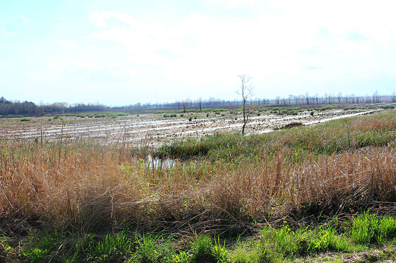 former rice fields at the refuge