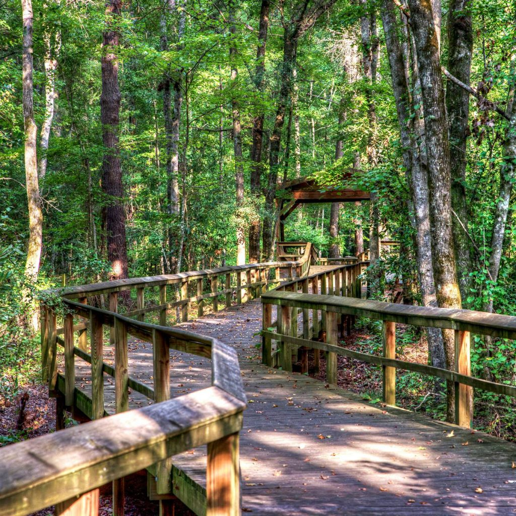 boardwalk in the walterboro wildlife sanctuary