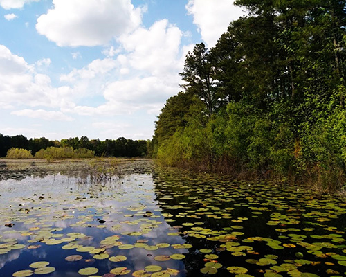Savannah National Wildlife Refuge rice field
