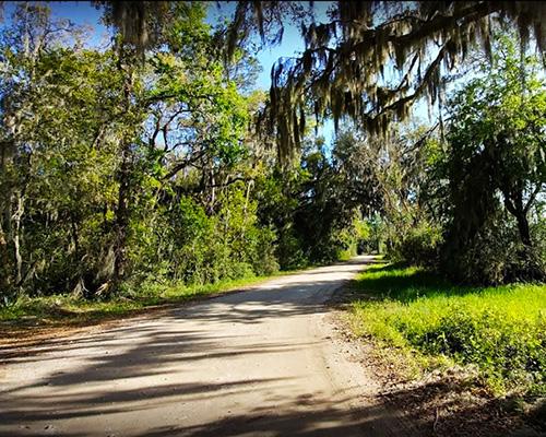 Savannah National Wildlife Refuge drive
