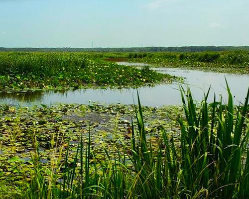 Savannah National Wildlife Refuge former rice field