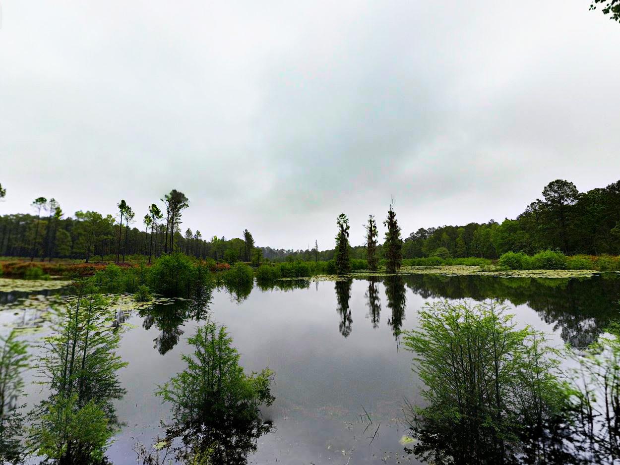 Webb Wildlife Management Area lake view