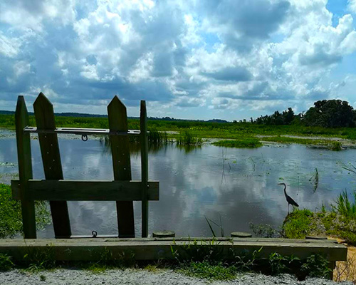 Savannah National Wildlife Refuge rice trunk