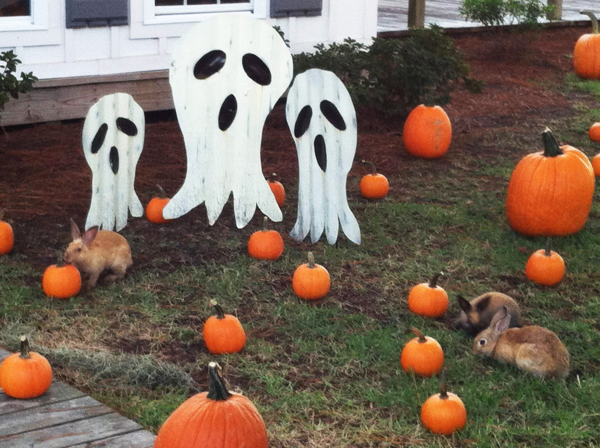 Ghosts, pumpkins, and bunnies