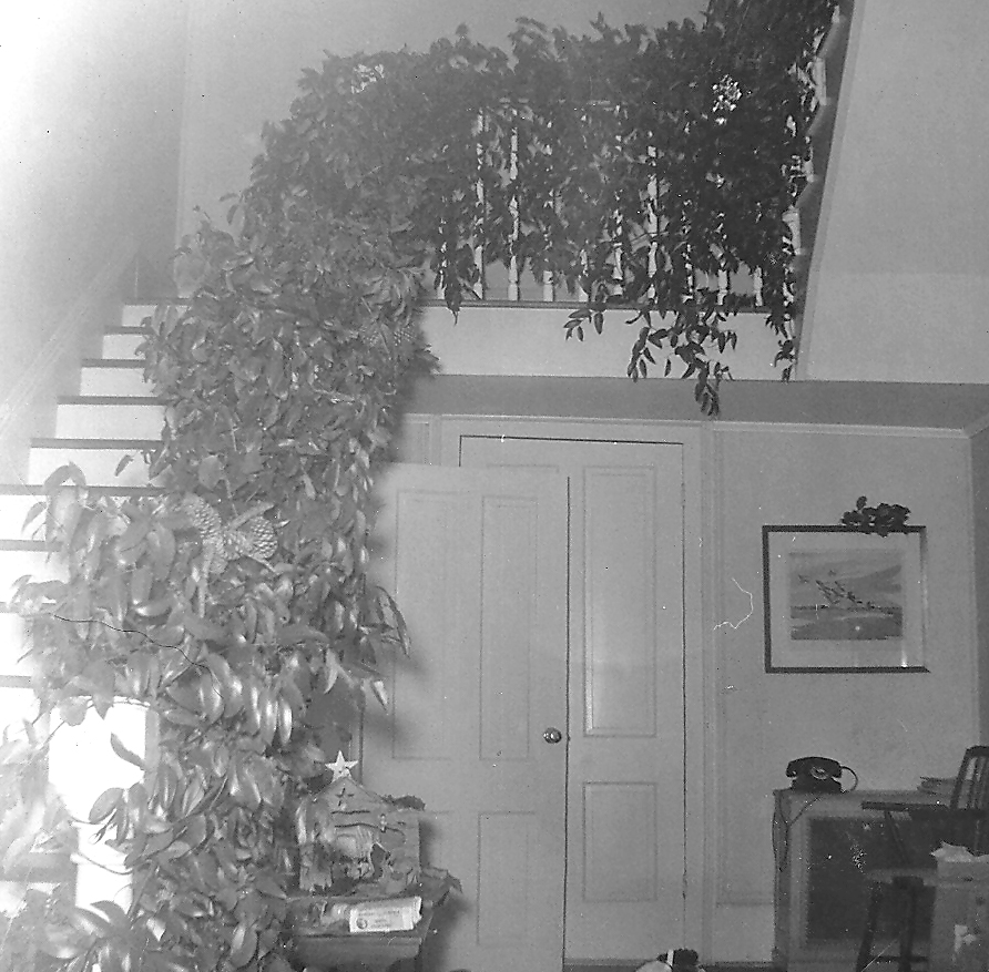 View of the interior of the Frampton Plantation House decorated for Christmas in the 1950s