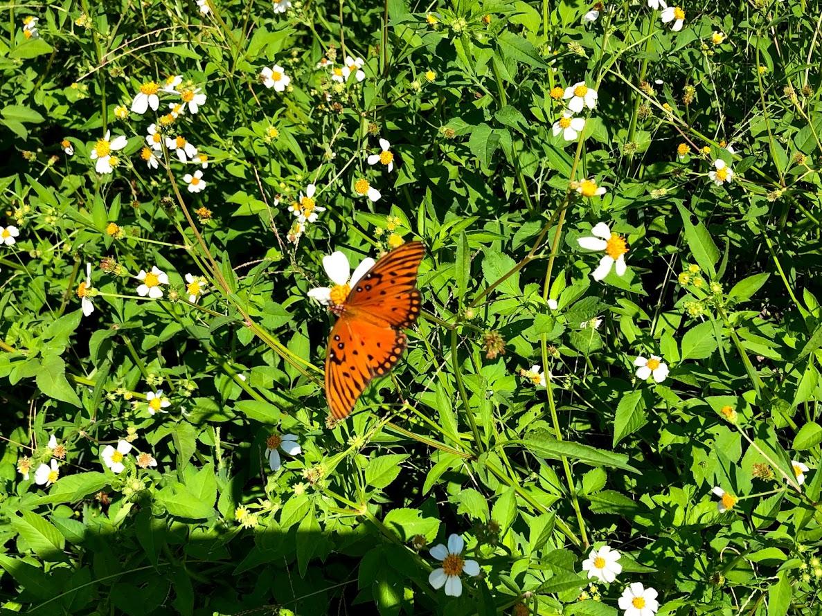 butterflies along the spanish moss trail