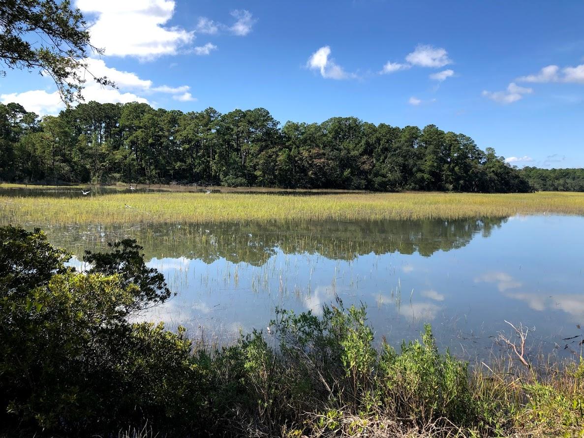 spanish moss trail albergotti creek