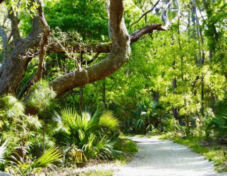 Take a Hike – On Edisto Island!