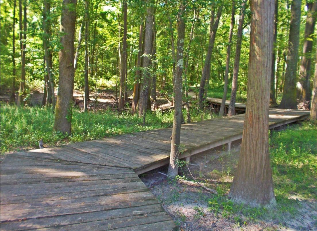 colleton state park