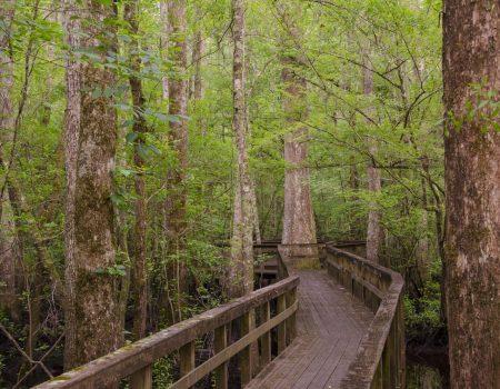 Hiking the Edisto Nature Trail