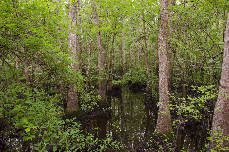 edisto nature trail, jacksonboro, sc