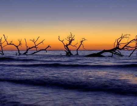 Walk on the Wild Side at Hunting Island State Park