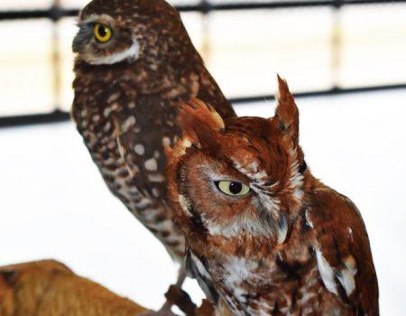 Walterboro's Newest Attraction… the Walterboro Wildlife Center