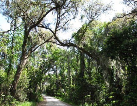 Savannah National Wildlife Refuge Hiking Trails