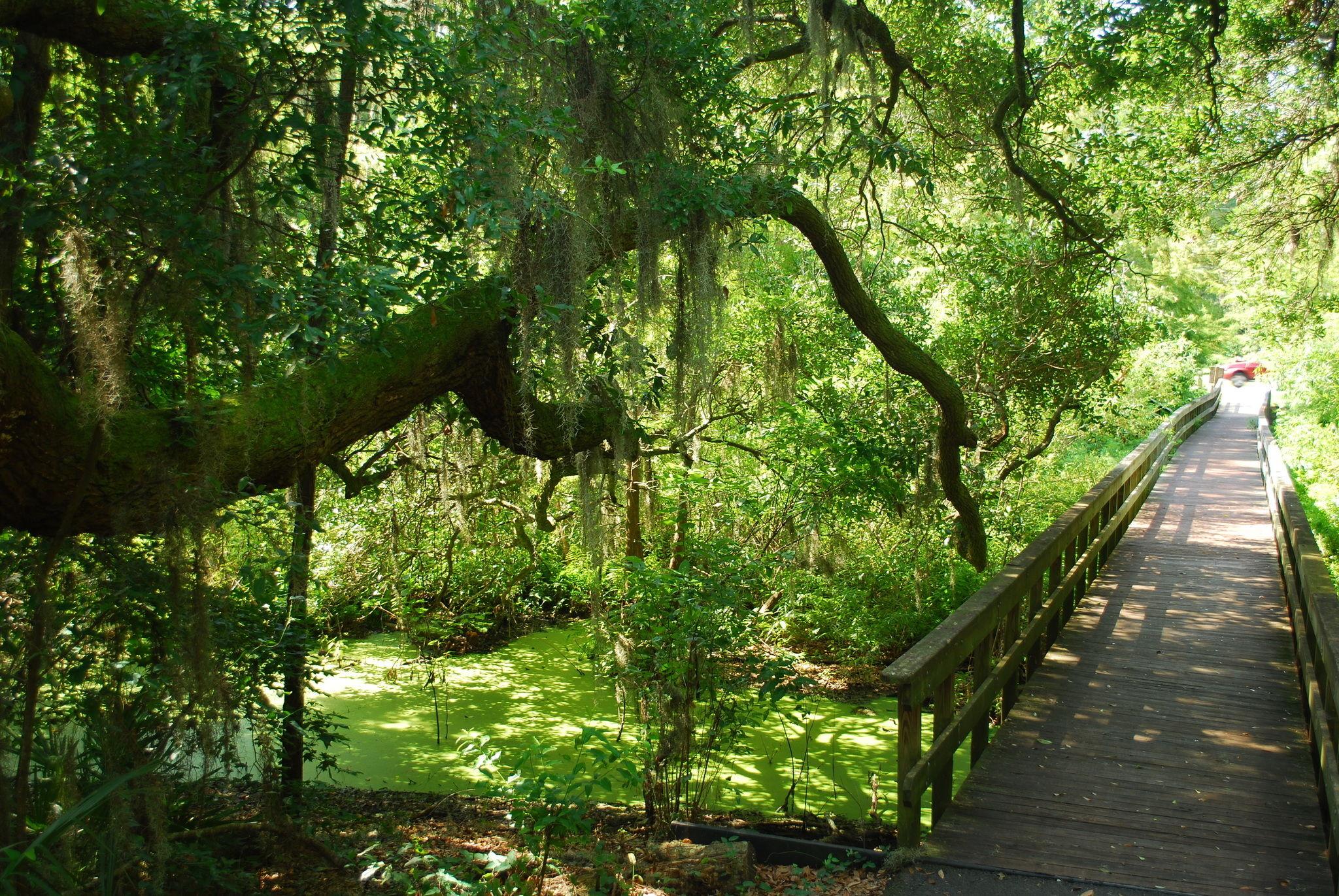 cypress wetlands rookery port royal sc
