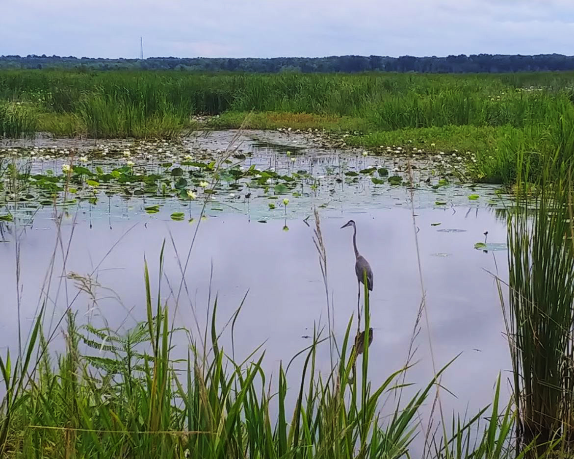 Lowcountry Wildlife Preserves and Nature Trails