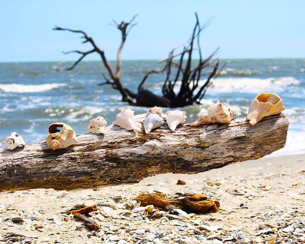 Top Ten Natural Wonders to See Between Charleston and Savannah